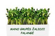 Mano grupės žalioji palangė